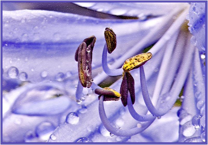violet flower in rain