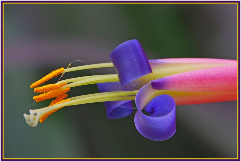 Flower with rainbow color