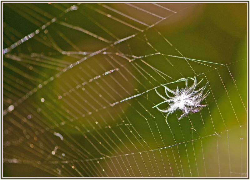 feature in spider web