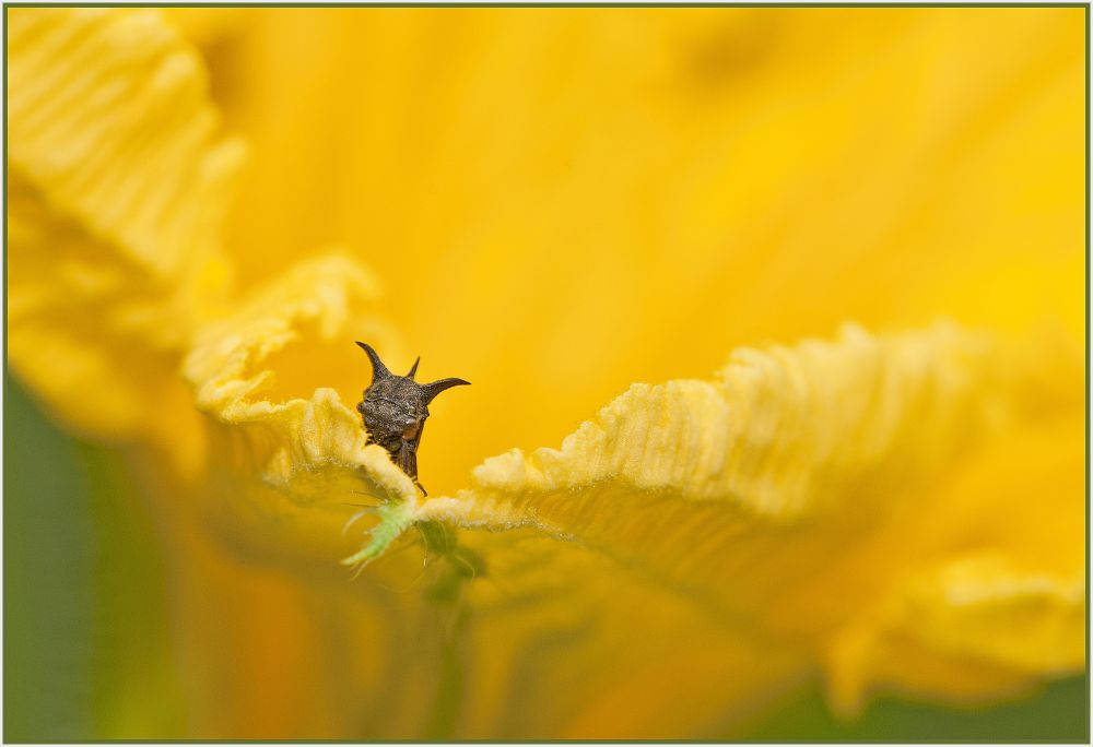 Bug in yellow flower