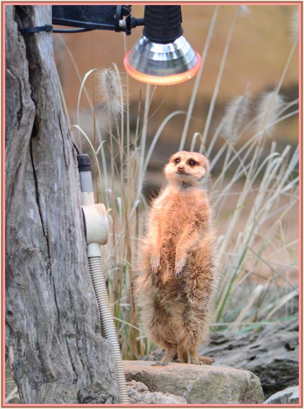 Keep warm   Taranga zoo