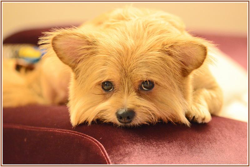 Little doggie