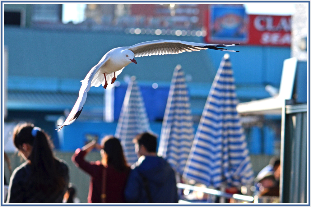 Seagull in fish market