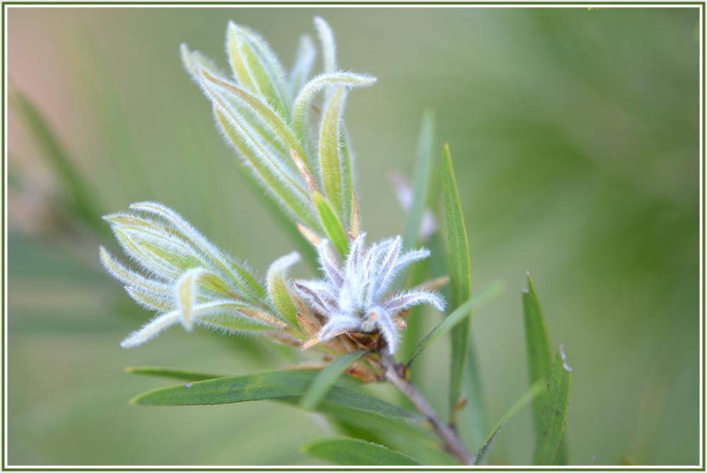 white green flower