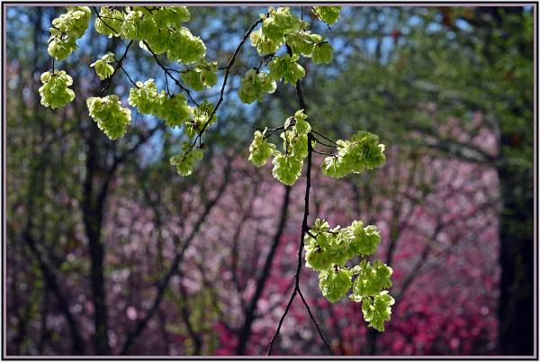 Spring color in Canberra