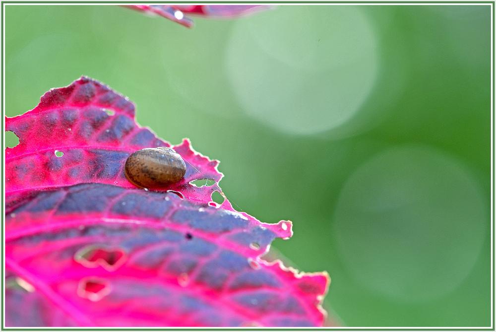 Snail on purple plant