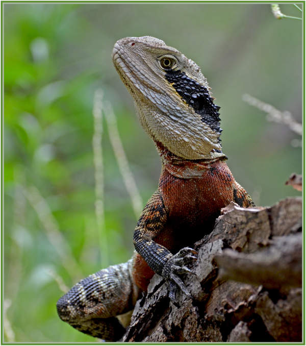 Aminus3 Color Featured photo water dragon | 2 March 2014