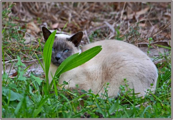 cat hides behind weed