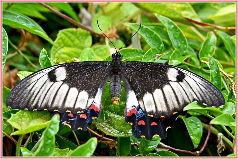 black butterfly on a cold day
