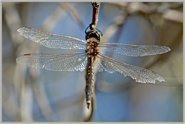 dragonfly with broken wings