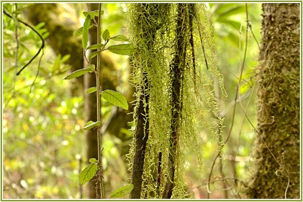 Rain forest, Franklin River, Strahan, Tasmania