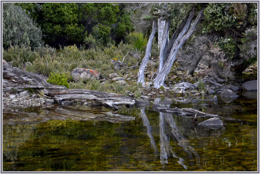 Reflection early morning Lake St Claire Tasmania