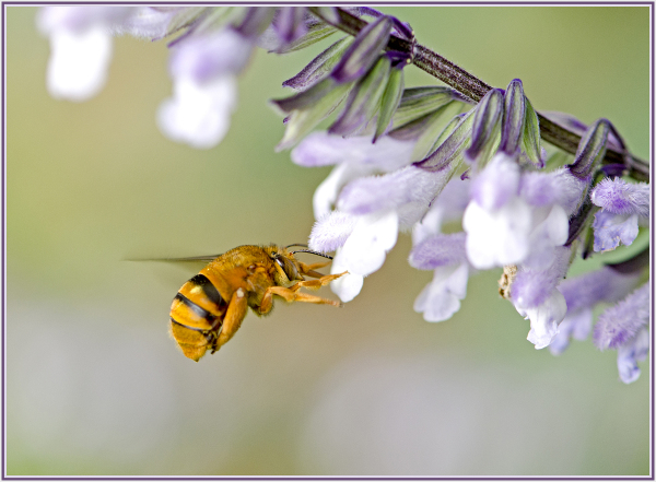 Aminus3 Color Featured photo Big bee | 28 March 2015