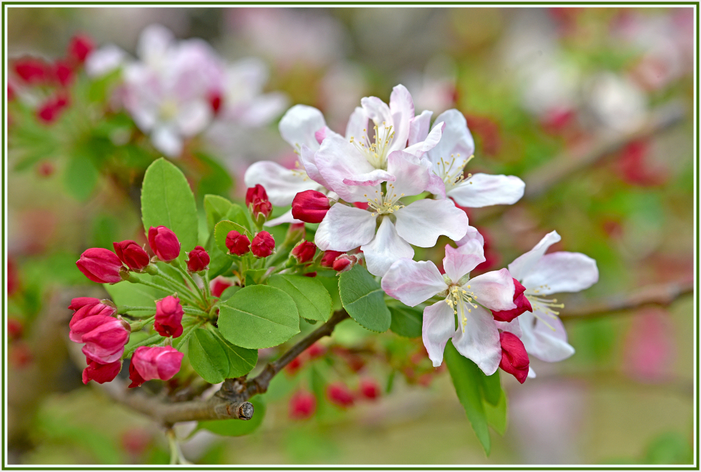 red and white blossom