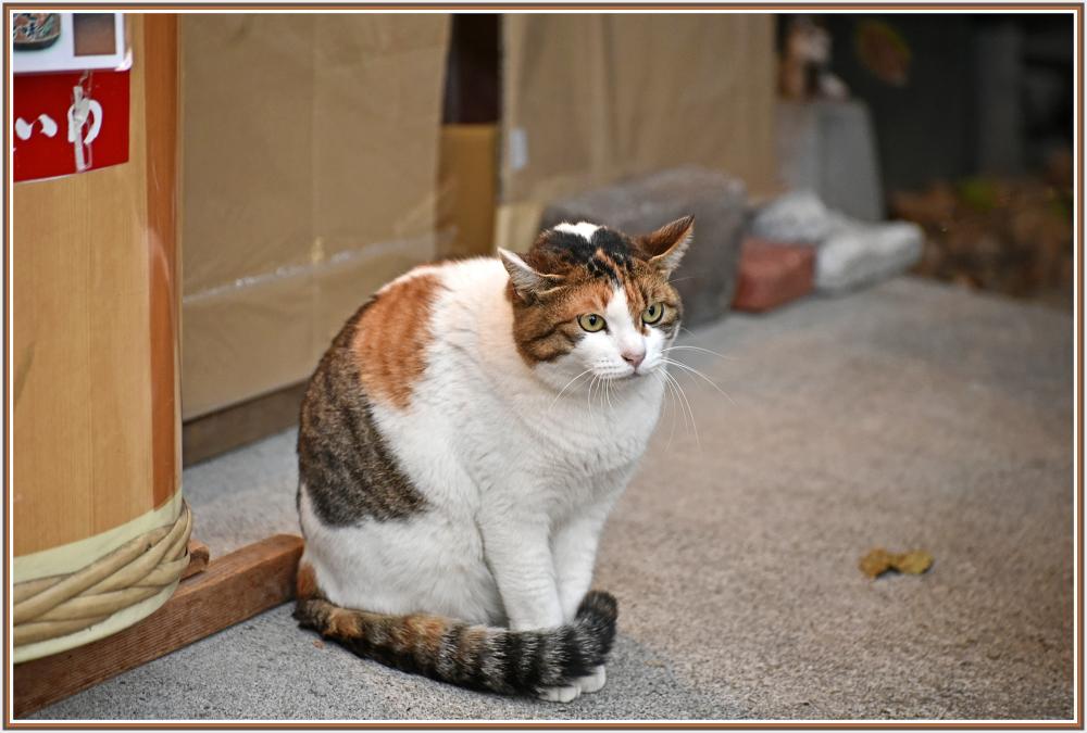 Tricolor cat in Hakone Japan