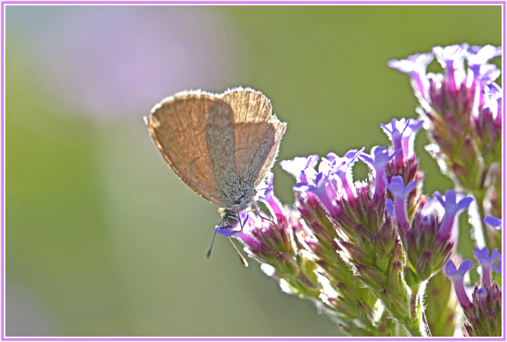 small butterfly on wild flower