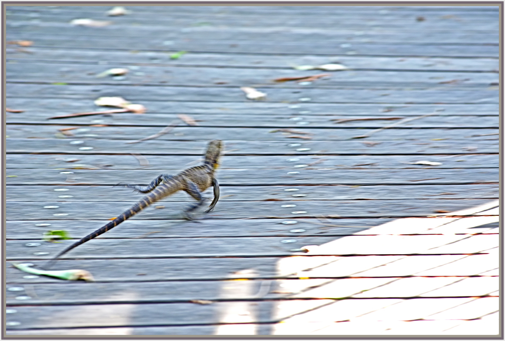 running water dragon