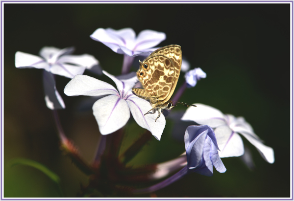 small butterfly on blue flower