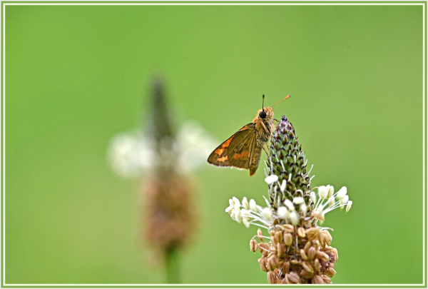 small butterfly on weed