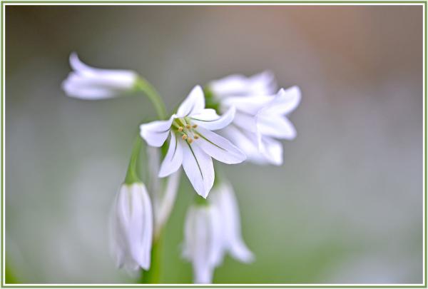 white bulb