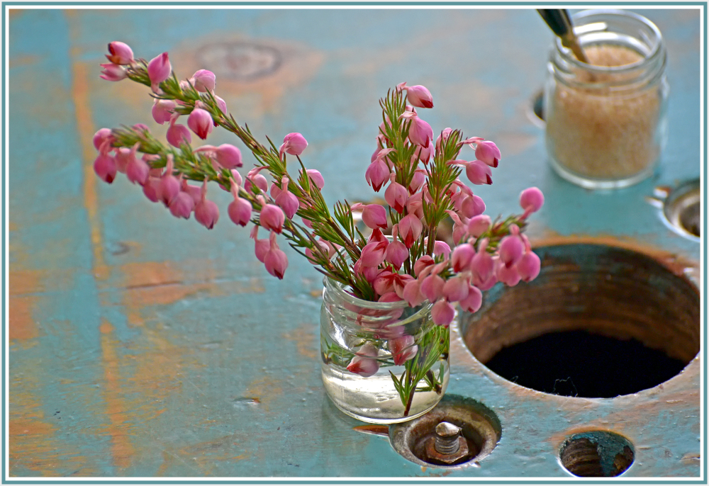 pink flower in Bruny Cafe Tasmania
