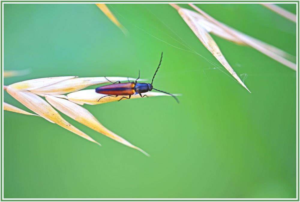 brown bug on grass