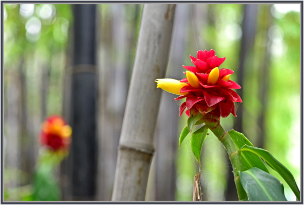 red flower and bamboo