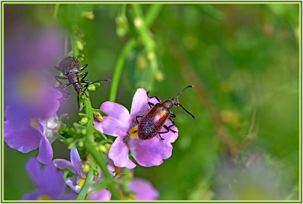 bugs on pink flower