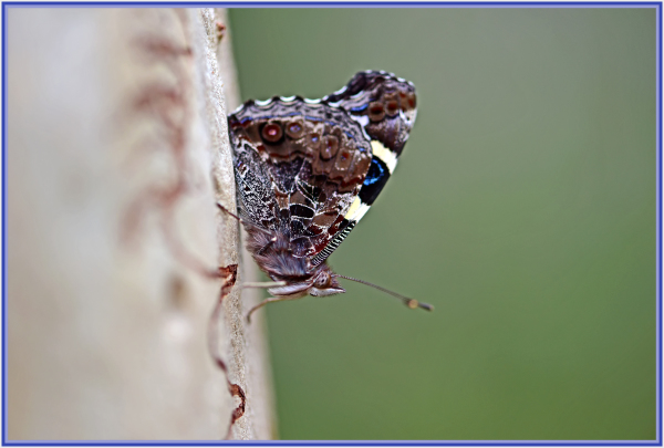 butterfly on a tree truck