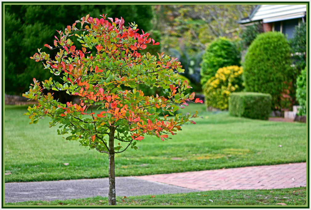 Small tree in Autumn