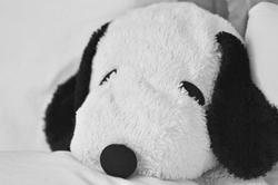 sleepy snoopy