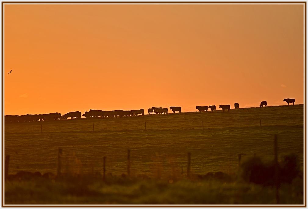 Sunrise Stanley Tasmania