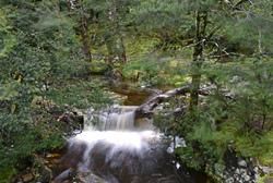 Rainforest in Cradle Mountains Tasmania