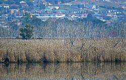 Tamar River Launceston Tasmania