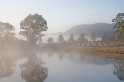 Misty morning in the vineyard Hunter Valley NSW