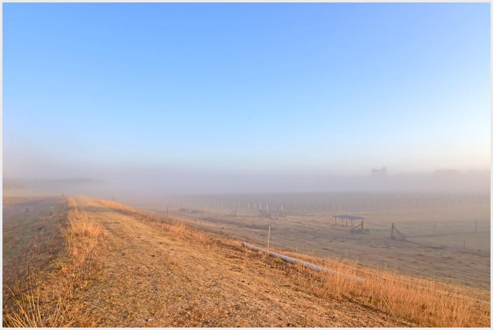 Mist in Hunter Valley