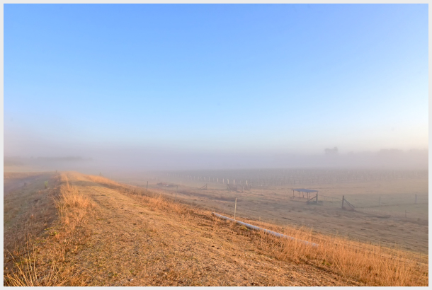 Mist in Hunter Valley