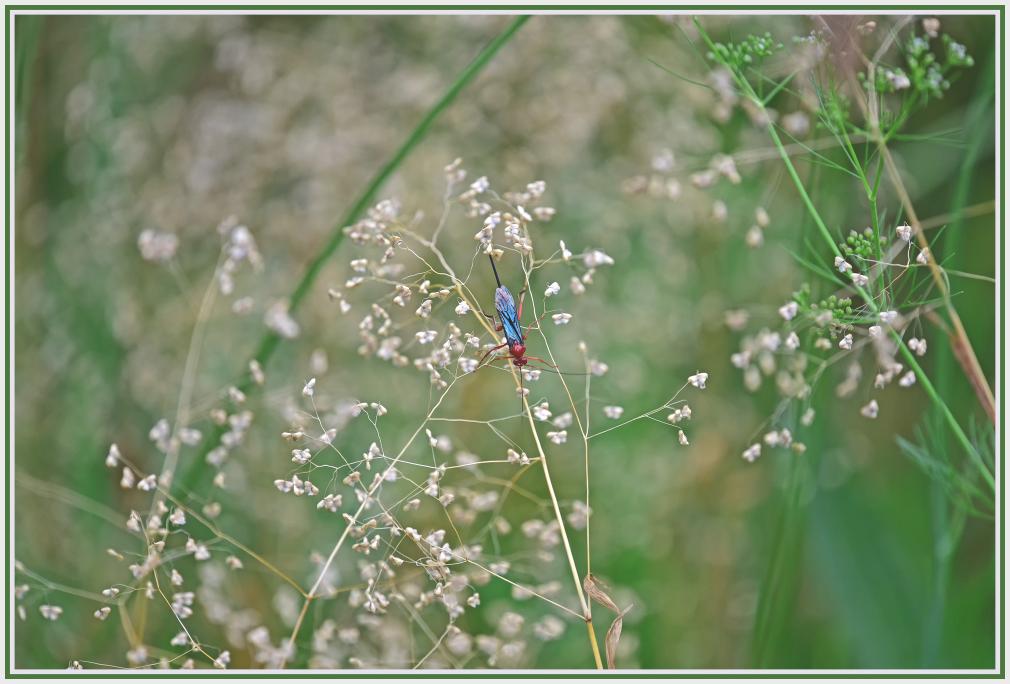bug on weed