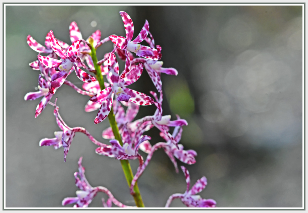 Small orchid