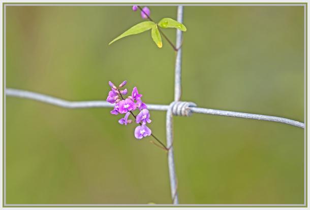 small pink wild flower