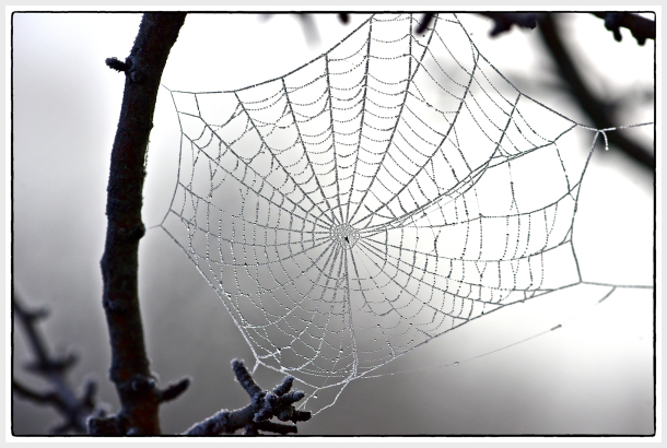 Aminus3 Featured photo spider web on a foggy morning | 10 July 2018