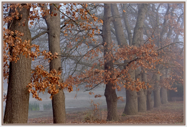 Winter trees in foggy morning
