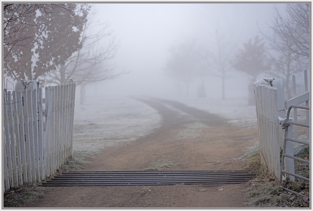 Foggy morning in a farm