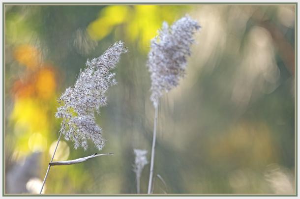 Tall pond grass