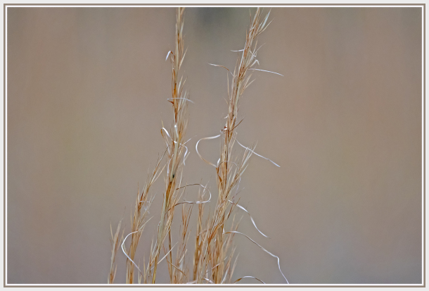 Brown grass