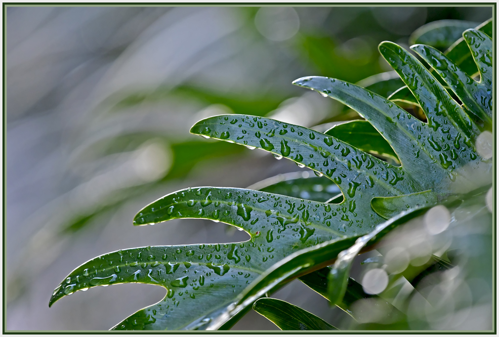 Rain on green leaves