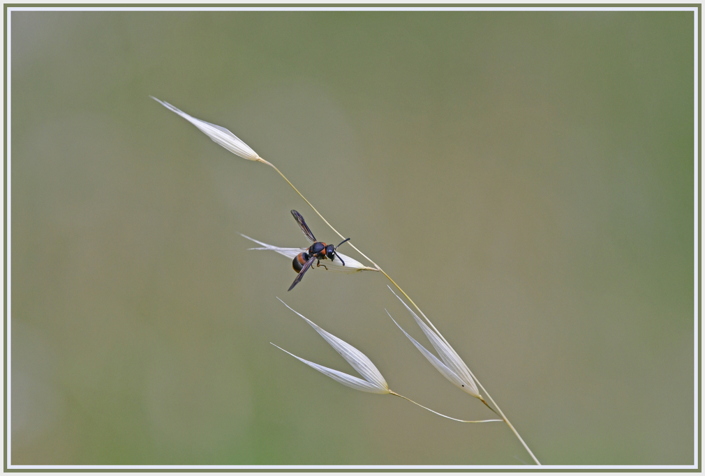 wasp on white grass