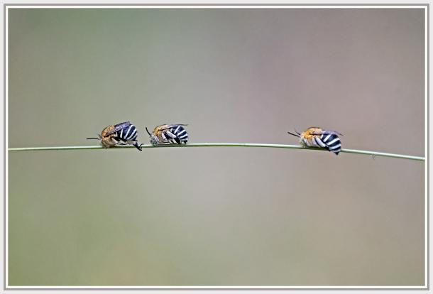Bees roosting
