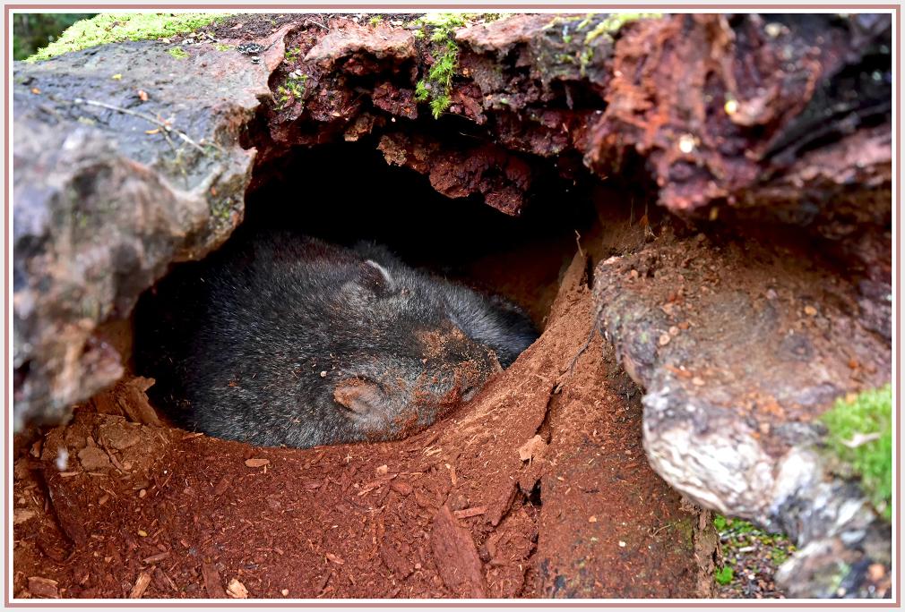 wombat hole