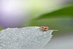 spider in the rain